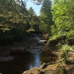 A Stream that leads to Lake Superior from the Fisheries.